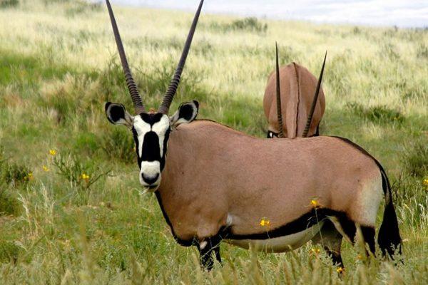 Mkomazi National Park1