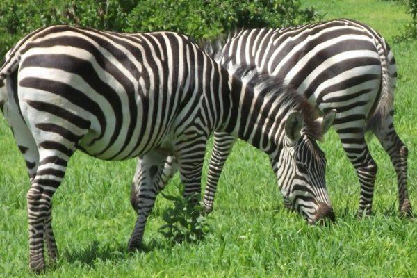 Mkomazi National Park2